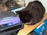 cat DSH snoozing sleeping on shelf in office above in tray and next to SDSL and wireless WiFi routers supervising 6 DHD