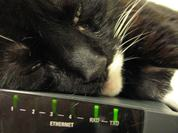 cat DSH snoozing sleeping resting head on SDSL router for warmth 4 DHD