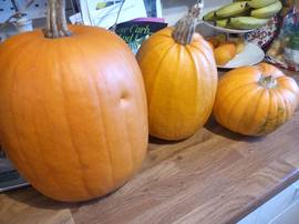 pumpkins homegrown three on kitchen counter 2018